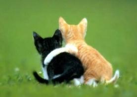 venskabogkaerlighed