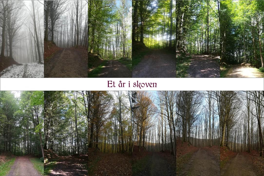Et-aar-i-skoven